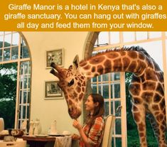 Travel dreams: 21 Crazy Animal Facts That Prove You Learn Something New Everyday – Quotes Vacation Places, Places To Travel, Travel Destinations, Vacations, Oh The Places You'll Go, Cool Places To Visit, Crazy Animal Facts, Crazy Facts, Learn Something New Everyday