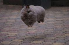 Delightful rabbit #rabbitlover
