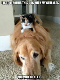 I Iz Controling This Dog With My Cuteness... #catoftheday