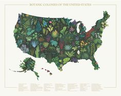 Botanic Colonies of the United States                         – M.I.D. Goods