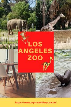 Los Angeles Zoo, Los Angeles Travel, Zoo Park, Europe Destinations, Best Places To Travel, Places To See, Empire Ottoman, First Class Seats, Photography Tips