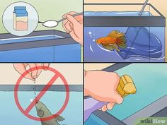 How to Save a Dying Betta Fish. Betta fish, also known as Siamese fighting fish, are beautiful, elegant aquatic creatures that can live for up to six years. They are hardy pets, but they can run. Betta Fish Tattoo, Betta Fish Care, Fish Tank For Kids, Fish Home, Tropical Fish Tanks, Betta Tank, Fish Wallpaper, Beta Fish, Siamese Fighting Fish