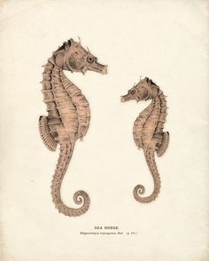 antique sea horses
