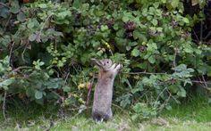 Peter Rabbit Photos