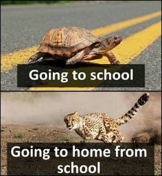 Best funny disney world memes truths 56 ideas