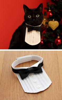 cat collar by akiko kino Cat Merchandise, Dog Clothes Patterns, Animal Hats, Pet Fashion, Pet Costumes, Cat Collars, Pet Store, Dog Bandana, Pet Clothes