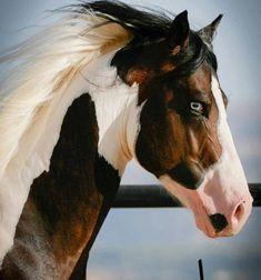 "scarlettjane22: "" ~Despre Cai~ (~About Horses~) """