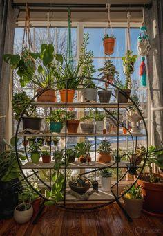Plant Aesthetic, Aesthetic Room Decor, Room Ideas Bedroom, Bedroom Decor, House Plants Decor, Bedroom With Plants, Plants In Living Room, Plant Rooms, Indie Room