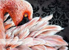 """This 11x14"""" lesser flamingo against a dark damask print background was painted in colored pencil on strathmore vellum paper. It will come matted in black making its overall size 16x20"""". It will fit right into any standard 16x20"""" frame, making it the centerpiece of any room!  Watch me draw this!..."""