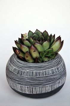 Nice contrast with the succulent.