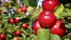 Limfjordsfortællinger - Æbleriet i Vestsalling. I landsbyen Rødding i Vestsalling arbejder de alle sammen med æbler. Der er også noget med, at de har lavet en aftale med FN om at passe nogle frugttræer ved Spøttrup Borg, og i hvert fald laver de en æblemost med en helt vidunderlig smag. 3