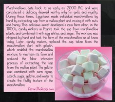 marshmallow plant facts | Marshmallows Were Originally Made From The Marshmallow Plant