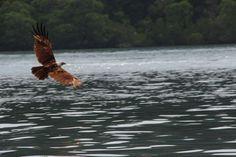 Eagle Langkawi Malaysia