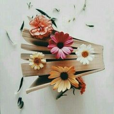 book, flowers, and vintage image& Book Aesthetic, Flower Aesthetic, Book Flowers, Lily Evans, Book Photography, Flower Petals, Bookstagram, Book Worms, Flower Power