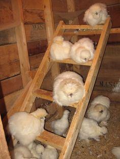 Silkie ladder