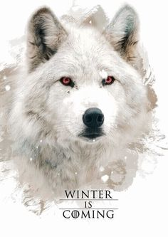Imagem de game of thrones, ghost, and direwolf
