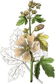 Pink-Botanical-Flower-Image-GraphicsFairy.jpg (1190×1800)
