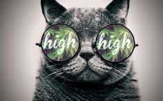Marijuana Heart gif - Google Search