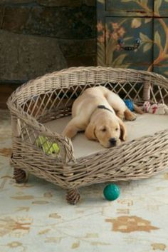 Wicker Dog Bed from Soft Surroundings