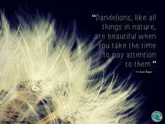 Flowering Wisdom   Gardening Quotes http://eaglesonlandscape.com/flowering-wisdom-gardening-quotes-42/