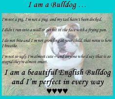 Beautiful Bulldog. So true! I hate when people say any of those about Monster!!!!