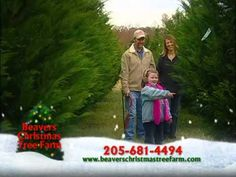 1000 images about christmas tree farm on pinterest for How did the christmas tree tradition start