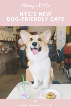 Enjoying Caffeine and Cuddles at NYC's Dog-Friendly Cafe Funny Animals With Captions, Cute Funny Animals, Cute Baby Animals, Funny Dogs, Animals And Pets, Cute Cats, Cute Corgi, Cute Puppies, Dogs And Puppies