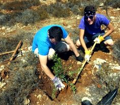 Guests from The Jerusalem Heritage House working on an olive grove.