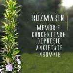 Ceai de rozmarin - beneficii diverse | La Taifas Herbalism, Cancer, Learning, Crafts, Health, Insomnia, Herbal Medicine, Manualidades, Studying
