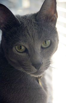 TOP 30 CAT BREEDS LOVED discovering so many breeds I have never seen!