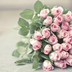 ROSE (PALE PINK) - Grace, Joy