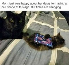Start Your Caturday Morning With These Hilarious Memes