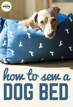 """Learn how to make a dog bed that is quick and easy using a pillow form and stuffing. The dog bed in this video is made using a 16"""" square pillow form, but the size of the bed can be easily changed. Square pillow forms come in a variety of sizes with the most common ranging from 12"""" up to 22"""". If you want to make a dog bed that is even larger you can always use foam and cut it to any size you would like."""