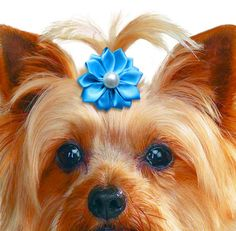 Pearl Center Ribbon Flower Dog Hair Bow in 11 Colors!