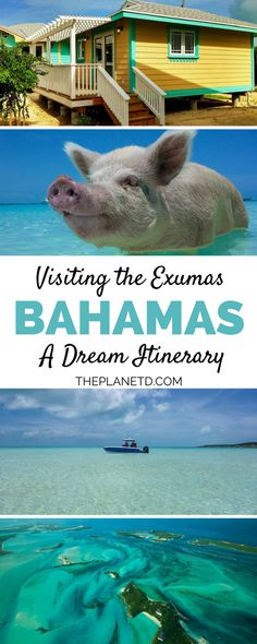 The ultimate guide to your dream trip to the Bahamas. More than a trip consisting of silly theme hotels and cruises, this destination is awaiting adventure. Swim with the local pigs in the ocean or explore secluded beaches - the options are endless. Travel in Exuma Cays, Bahamas - The Best of the Caribbean. | Blog by the Planet D #Bahamas #Caribbean