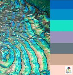 Iridescent Abalone Sea Shell - Color Palette Inspiration - Paint My Place App | www.paintmyplace,mobi
