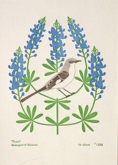 bluebonnets & mockingbird
