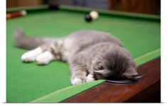 Poster Print Wall Art Print entitled Kitten playing on pool table., None