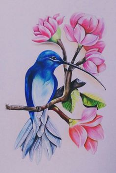Colorful bird painting watercolor pencils 69 ideas for 2019 Oil Pastel Art, Oil Pastel Drawings, Cool Art Drawings, Bird Drawings, Art Drawings Sketches, Colorful Drawings, Pencil Sketch Drawing, Aquarell Tattoo Vogel, Hummingbird Painting