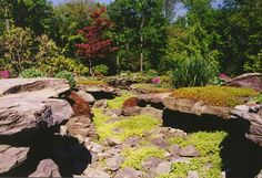 Natural Dry Stream Bed in Bergen County, NJ: This rock garden (dry streambed) and landscaping is in Saddle River, Bergen County NJ.  It combines Sedum album Coral Carpet (stone crop), the cascading Sedum sarmentosum (stone crop), Fagus sylvatica Roseo-marginata (tri-color beech) and the gable variety of Azalea x Herbert flowering in the backround.
