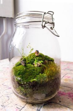 On a budget but still want a great terrarium? Don't be afraid to recycle a jar gathering dust around your house!