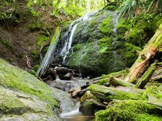Coal Creek Falls Trail at Cougar Mountain Park in Bellevue / Issaquah.