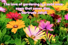 #almostspring #gardens #flowers #prettyflowers #gardeningfun #lifeisbeautiful