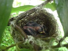 Baby bird under our persimmon tree