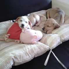 Peppa Pig dormi e non rompere oggi è venerdì tutto relax Sven & Holaf
