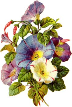 Welcome to Amazing Adornments vendor of vintage and antique jewelry Art Vintage, Vintage Botanical Prints, Botanical Drawings, Vintage Prints, Morning Glory Flowers, Illustration Blume, Flowers Gif, Decoupage, China Painting