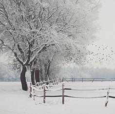 the stillness