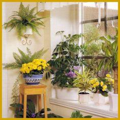 Blumenfenster für alle Himmelsrichtungen.  Blumenfenster, doch neben der Pflege gehört auch ein wenig Ahnung dazu, denn nicht jede Pflanze ist für jedes Fenster gleich gut geeignet.  Gibt es ein schöneres Fenster in einer Wohnung als eines, das mit Blumen gefüllt ist?   http://www.zimmerpflanzenfreunde.de/blumenfenster/