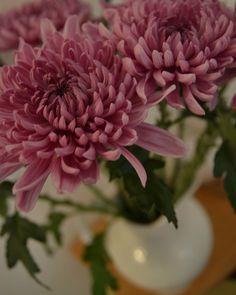 Magnifique! Plants, Flowers, Flora, Plant, Planting