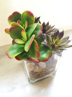 Learn how to create a succulent garden for under $5. This super easy DIY won't take you long and it will look amazing. You will get a ton of compliments.